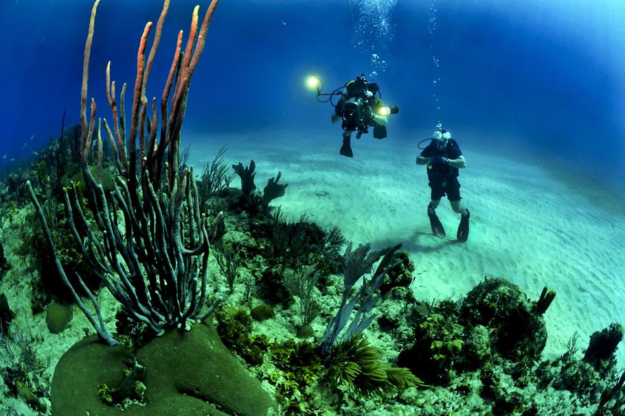 ダイビング海藻