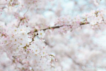 紫外線に負けない、春肌づくり