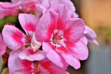 悩みや不安をやわらげ自然と前向きになる香り