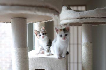 マンデイムーンの保護猫活動