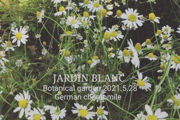 JARDIN BLANC の庭から